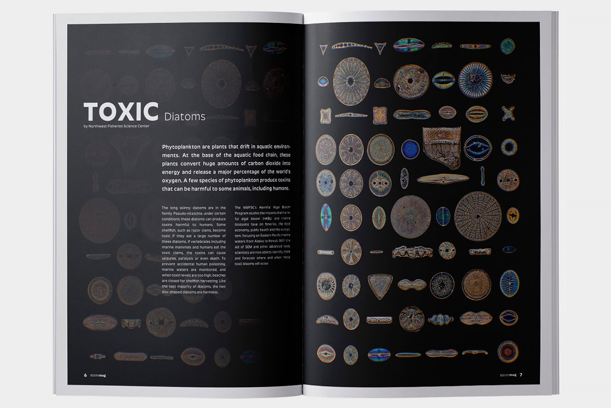 micromag-scientific-journal-publication-artical-1-image